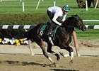 "Close Hatches worked 4 furlongs in :46.71 at Belmont Park Oct 26.<br><a target=""blank"" href=""http://photos.bloodhorse.com/BreedersCup/2013-Breeders-Cup/Breeders-Cup/32986083_QMHXWK#!i=2860860545&k=CmjBHqJ"">Order This Photo</a>"