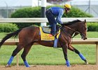 "Bodemeister<br><a target=""blank"" href=""http://photos.bloodhorse.com/TripleCrown/2012-Triple-Crown/Works/22611108_LR3wcn#!i=1827137704&k=z2sbPDp"">Order This Photo</a>"