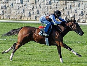 Proviso works on the Keeneland Turf, October 23, 2010.