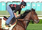 "Orb.<br><a target=""blank"" href=""http://photos.bloodhorse.com/TripleCrown/2013-Triple-Crown/Kentucky-Derby-Workouts/29026796_jvcnn8#!i=2490067537&k=T3rDLkF"">Order This Photo</a>"