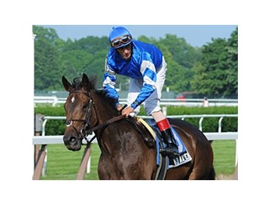 Hibaayeb 