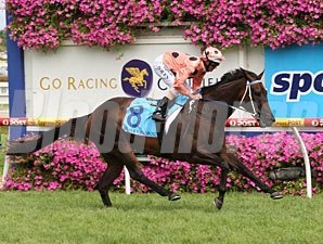 Black Caviar wins the CFO rr Stakes.