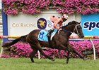 Black Caviar cruises in the CF Orr Stakes at Caulfield securing win number 18.