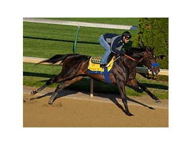 "Pioneerof the Nile works at Churchill Downs on April 21.<br><a target=""blank"" href=""http://www.bloodhorse.com/horse-racing/photo-store?ref=http%3A%2F%2Fpictopia.com%2Fperl%2Fgal%3Fprovider_id%3D368%26ptp_photo_id%3D8026732%26ref%3Dstory"">Order This Photo</a>"
