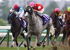 "Gold Ship won the Takarazuka Kinen in 2013 and 2014 (shown).<br><a target=""blank"" href=""http://photos.bloodhorse.com/AtTheRaces-1/At-the-Races-2014/i-29Xb82G"">Order This Photo</a>"