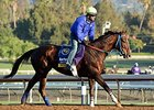 "Belle Gallantey at Santa Anita<br><a target=""blank"" href=""http://photos.bloodhorse.com/BreedersCup/2014-Breeders-Cup/Works/i-Mwd482h"">Order This Photo</a>"
