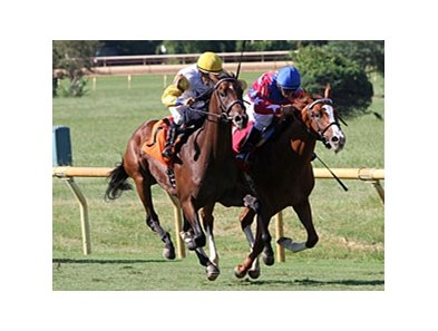 Java's War (left) will run in the Toyota Blue Grass Stakes at Keeneland Apr. 13.