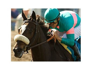 "Zenyatta is the 5-2 morning-line favorite for the Classic.<br><a target=""blank"" href=""http://www.bloodhorse.com/horse-racing/photo-store?ref=http%3A%2F%2Fpictopia.com%2Fperl%2Fgal%3Fprovider_id%3D368%26ptp_photo_id%3D8148338%26ref%3Dstory"">Order This Photo</a>"