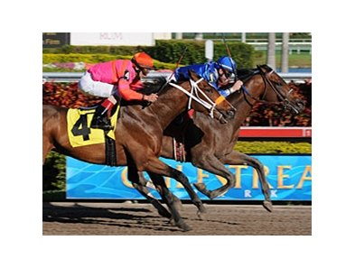 Free Country won an allowance race at Gulfstream Park on January 8.