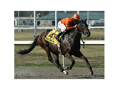 2008 Kentucky Cup Distaff winner Bear Now returns in 2009.