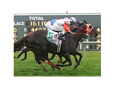 Ben's Cat won the Turf Monster in 2011 and 2012 (shown).