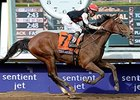 "Texas Red won the 2014 Breeders' Cup Juvenile. <br><a target=""blank"" href=""http://photos.bloodhorse.com/BreedersCup/2014-Breeders-Cup/Juvenile/i-dVVKvFM"">Order This Photo</a>"