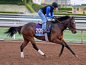Souper Colossal works towards the Breeders' Cup.