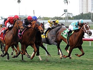 Channel Lady wins the 2013 Suwannee River Stakes.