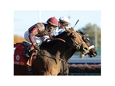 "2010 Breeders' Cup Dirt Mile winner Dakota Phone returns in the Native Diver.<br><a target=""blank"" href=""http://www.bloodhorse.com/horse-racing/photo-store?ref=http%3A%2F%2Fpictopia.com%2Fperl%2Fgal%3Fprovider_id%3D368%26ptp_photo_id%3D9267993%26ref%3Dstory"">Order This Photo</a>"