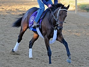 J. B.'s Thunder working towards the Breeders' Cup.