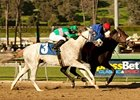 "California Nectar holds off Zazu to win the Santa Ynez Stakes. <br><a target=""blank"" href=""http://www.bloodhorse.com/horse-racing/photo-store?ref=http%3A%2F%2Fpictopia.com%2Fperl%2Fgal%3Fprovider_id%3D368%26ptp_photo_id%3D9372220%26ref%3Dstory"">Order This Photo</a>"