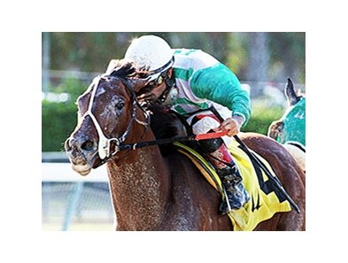 Csaba and  Luis Saez take the Fred W. Hooper Handicap.