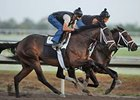 Uncle Mo Works Half-Mile at Palm Meadows