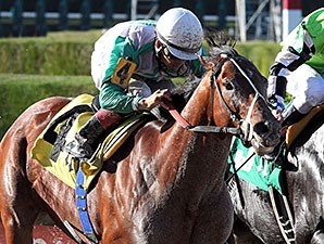 Csaba winning the 2013 edition of the Fred W. Hopper Handicap (G3)