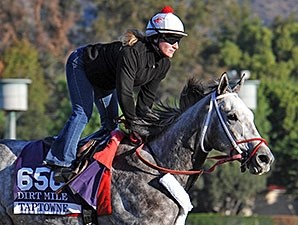 Taptowne - 2013 Breeders' Cup, October 29, 2013.