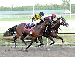 Golden Lad wins an AOC at Gulfstream Park on February 5, 2014.