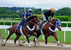 Guyana Star Dweej Works at Belmont.
