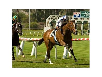 "Misty Ocean scored her third consecutive win with a 3/4 length triumph in the Honeymoon (gr. IIT) June 7 at Hollywood Park. <br><a target=""blank"" href=""http://www.bloodhorse.com/horse-racing/photo-store?ref=http%3A%2F%2Fpictopia.com%2Fperl%2Fgal%3Fprovider_id%3D368%26ptp_photo_id%3D4769257%0D%0A%26ref%3Dstory"">Order This Photo</a>"