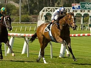 Misty Ocean scored her third consecutive win with a 3/4 length triumph in the Honeymoon (gr. IIT) June 7 at Hollywood Park.