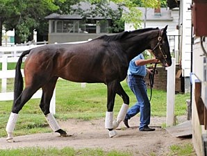 Rachel Alexandra at Belmont Park, June 23, 2009.