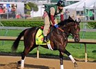 "Itsmyluckyday<br><a target=""blank"" href=""http://photos.bloodhorse.com/TripleCrown/2013-Triple-Crown/Kentucky-Derby-Workouts/29026796_jvcnn8#!i=2488855285&k=9vRNctc"">Order This Photo</a>"