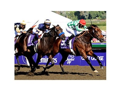 "Muhannak won the 2008 Breeders' Cup Marathon.<br><a target=""blank"" href=""http://www.bloodhorse.com/horse-racing/photo-store?ref=http%3A%2F%2Fpictopia.com%2Fperl%2Fgal%3Fprovider_id%3D368%26ptp_photo_id%3D6455748%26ref%3Dstory"">Order This Photo</a>"