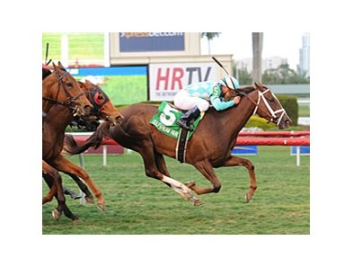 "Channel Lady won the Suwannee River Stakes at nine furlongs Feb. 9 at Gulfstream Park.<br><a target=""blank"" href=""http://photos.bloodhorse.com/AtTheRaces-1/at-the-races-2013/27257665_QgCqdh#!i=2358102834&k=bTFxJHs"">Order This Photo</a>"