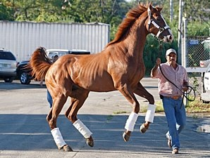 Shackleford arrives at Monmouth Park on July 27, 2011.
