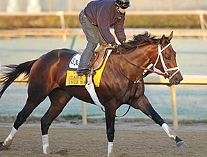 Uncle Mo on the track leading up to the Breeders' Cup Classic.