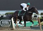 "Royal Delta works at Belmont Park on October 26. <br><a target=""blank"" href=""http://photos.bloodhorse.com/BreedersCup/2013-Breeders-Cup/Breeders-Cup/32986083_QMHXWK#!i=2860749700&k=pNp8zqn"">Order This Photo</a>"