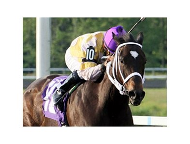 Purely Hot makes her Woodbine debut in the Bessarabian Stakes.
