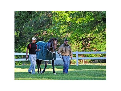 "Oxbow at Belmont Park<br><a target=""blank"" href=""http://photos.bloodhorse.com/TripleCrown/2013-Triple-Crown/Belmont-Stakes-145/29744699_jpqpwR#!i=2557234598&k=4LVKNqq"">Order This Photo</a>"