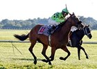 Miz Ida winning the Kentucky Downs Ladies Turf.