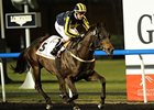 Krypton Factor won the Dubai Golden Shaheen by 2 1/4 lengths.