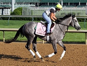 Flashy Gray - Churchill Downs, May 1, 2013.