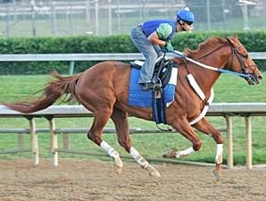 Curlin Gears Up for Stephen Foster