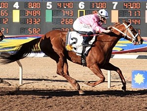 Hennesey Smash wins the 2013 Peppers Pride Handicap.