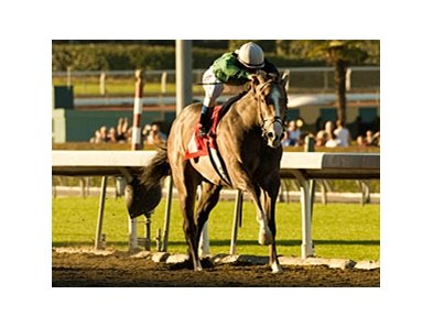 "The Pamplemousse won the San Rafael on Jan. 17. <br><a target=""blank"" href=""http://www.bloodhorse.com/horse-racing/photo-store?ref=http%3A%2F%2Fgallery.pictopia.com%2Fbloodhorse%2Fgallery%2FS626792%2Fphoto%2F7456876%2F%3Fo%3D4"">Order This Photo</a>"