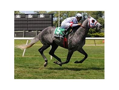"Kip Deville will try a mile and an eighth in the Gulfstream Park Turf Handicap.<br><a target=""blank"" href=""http://www.bloodhorse.com/horse-racing/photo-store?ref=http%3A%2F%2Fpictopia.com%2Fperl%2Fgal%3Fprovider_id%3D368%26ptp_photo_id%3D5116175%26ref%3Dstory"">Order This Photo</a>"