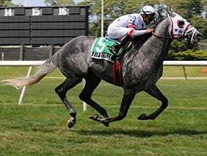 Kip Deville Horse Profile Bloodhorse