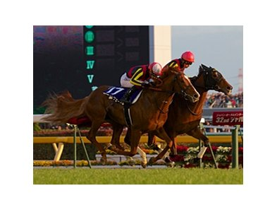 "Japan has taken the past 7 renewals of the Japan Cup, including Gentildonna in 2012.<br><a target=""blank"" href=""http://photos.bloodhorse.com/AtTheRaces-1/at-the-races-2012/22274956_jFd5jM#!i=2235855956&k=pQ6dzFR"">Order This Photo</a>"