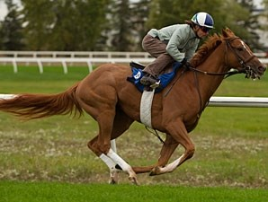 Stormy Lord - Woodbine, October 9, 2012.
