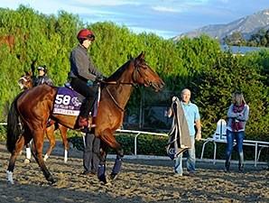 Chriselliam - 2013 Breeders' Cup, October 29, 2013.