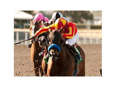"Irish Gypsy returns to California for the Rancho Bernardo Handicap.<br><a target=""blank"" href=""http://www.bloodhorse.com/horse-racing/photo-store?ref=http%3A%2F%2Fpictopia.com%2Fperl%2Fgal%3Fprovider_id%3D368%26ptp_photo_id%3D9599678%26ref%3Dstory"">Order This Photo</a>"